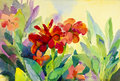 Watercolor flowers painting original colorful  of canna Lily flowers Royalty Free Stock Photo