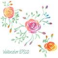 Watercolor flowers set. Vector roses.