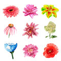 Watercolor flowers set of on white background Stock Photography