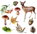 Watercolor forest set. Hand painted reindeer, mushrooms, fall leaves, pine cone, rowan, acorn isolated on white