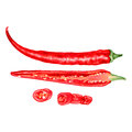 Watercolor fresh red chili pepper isolated on white background, vector illustration, cooking ingredients, condiment