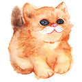 Watercolor cute cartoon fluffy ginger cat vector isolated