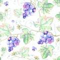 Watercolor Grape.