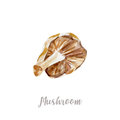 Watercolor hand drawn mushroom. illustration on white background