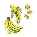 Watercolor hand drawn set of banana. Vector sketch