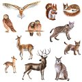 Watercolor hand-drawn set of forest animals isolated on a white background