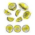 Watercolor hand drawn set of lemon. Vector sketch