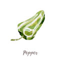 Watercolor hand drawngreen pepper. Isolated vegetable illustration on white background