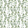 Watercolor hand painted silver dollar eucalyptus pattern . Greenery branches and leaves isolated on white seamless background. Fl