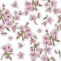 Watercolor hand painted cherry flowers wreath pattern. Botanical illustration in vintage style.