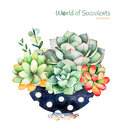 Watercolor handpainted succulent plant in painted pot and cactus flowering.