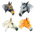 Watercolor horses illustrations of black white chestnut and seal brown Royalty Free Stock Photos