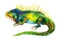 Watercolor iguana isolated on white background Royalty Free Stock Photo