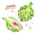 Watercolor illustration of artichoke