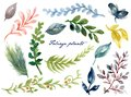 Watercolor illustration Botanical leaves collection Set of forest and garden and abstract colorful leaves elements hand painted