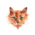 Watercolor illustration with cat.