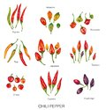 Watercolor illustration of chili peppers Royalty Free Stock Photo