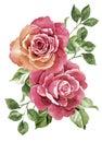 Akvarel ilustrace květina