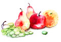 Watercolor illustration of fruit with a lot Royalty Free Stock Image