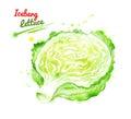 Watercolor illustration of iceberg lettuce