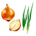 Watercolor illustration, image of a bow and onion bow