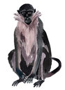 Watercolor illustration of a monkey marmoset Royalty Free Stock Photo