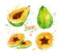 Watercolor illustration of papaya