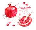 Watercolor illustration of pomegranate