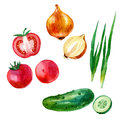 Watercolor illustration, set, image of vegetables, tomato and tomato slices, onion, cucumber and cucumber slices
