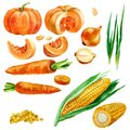 Watercolor illustration, set, images of vegetables, corn and corn kernels, carrots, pumpkins and onions. Royalty Free Stock Photo