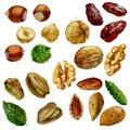 Watercolor illustration, set. Nuts, hazelnut, pistachios, walnut, almond and date fruit.