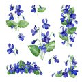 Watercolor illustration. Set of Violent flowers and leaves on white background.