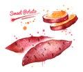 Watercolor illustration of sweet potato Royalty Free Stock Photo