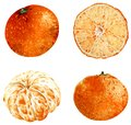 Tangerine clipart isolated on white background. Tropical illustration. Fruits. Watercolor illustration