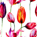 Watercolor illustration of Tulips flowers Stock Images