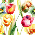 Watercolor illustration of Tulips flowers Royalty Free Stock Images