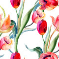 Watercolor illustration of Tulips flowers Stock Image