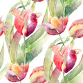 Watercolor illustration of tulips flowers seamless pattern Stock Image
