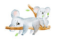 Watercolor illustration of two adorable cartoon koala bears sitting on eucalyptus tree branch Royalty Free Stock Photo