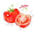 Watercolor illustration of whole and half tomato