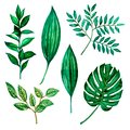 Watercolor illustrations. Green leaves, herbs