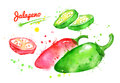 Watercolor illustrations of jalapeno pepper
