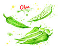 Watercolor of illustrations of okra