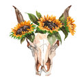 Watercolor isolated bull`s head with flowers and feathers on white background. Boho style. Skull for wrapping, wallpaper