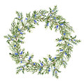 Watercolor juniper wreath. Hand painted evergreen branch with berries on white background. Botanical illustration for