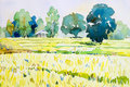 Watercolor landscape original painting colorful of cottage, rice field.