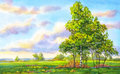 Watercolor landscape. The trees in the evening field