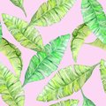 stock image of  Watercolor Tropical Leaves