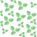 Watercolor leaves summer green pattern isolation gentle drawing wallpaper