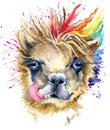 Watercolor llama illustration. fashion Tee shirt design.